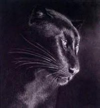 SolitaryPanther
