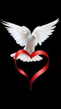 Dove_